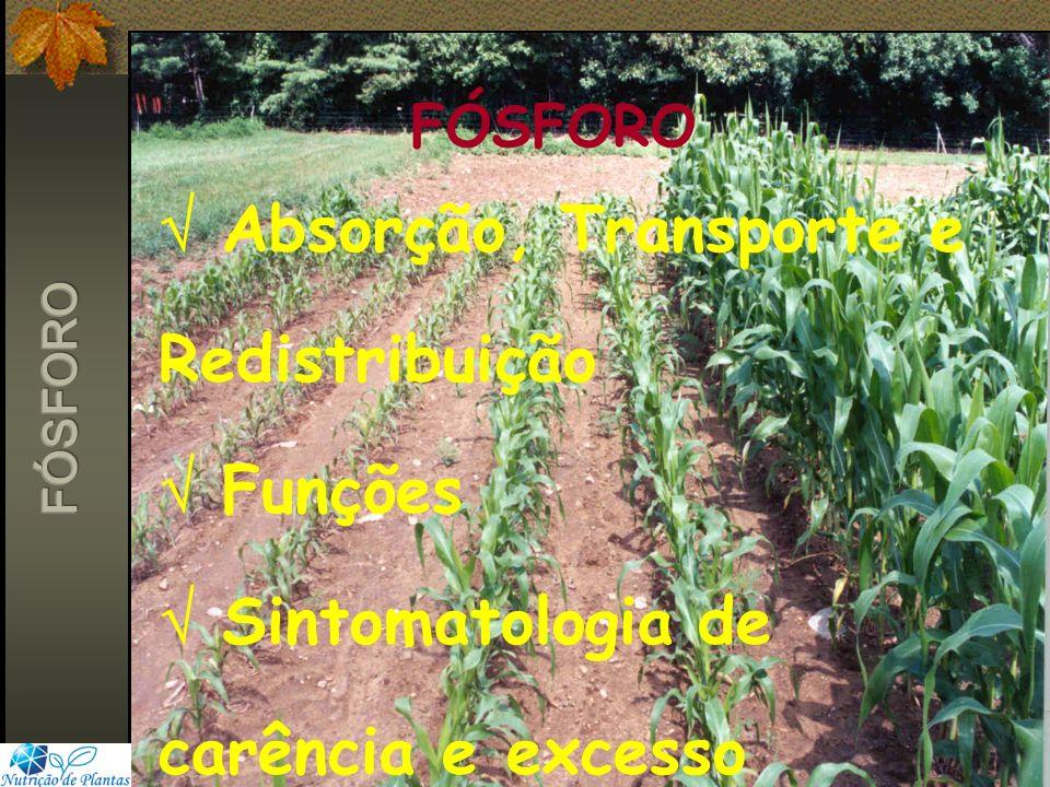 FÓSFORO  Absorção, Transporte e Redistribuição  Funções  Sintomatologia de carência e excesso.
