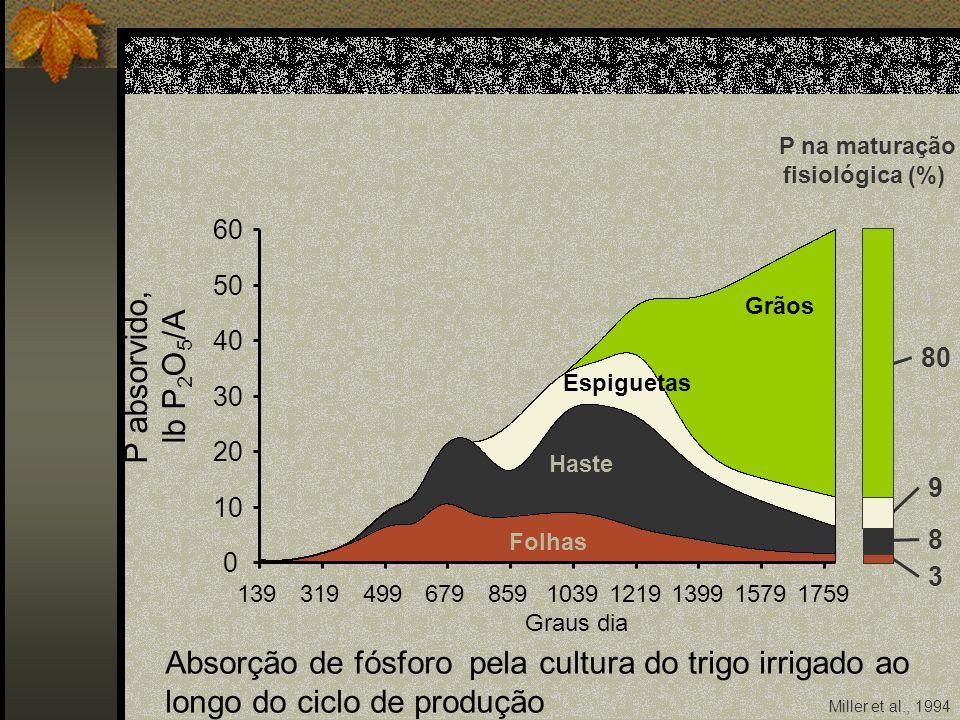P na maturação fisiológica (%)