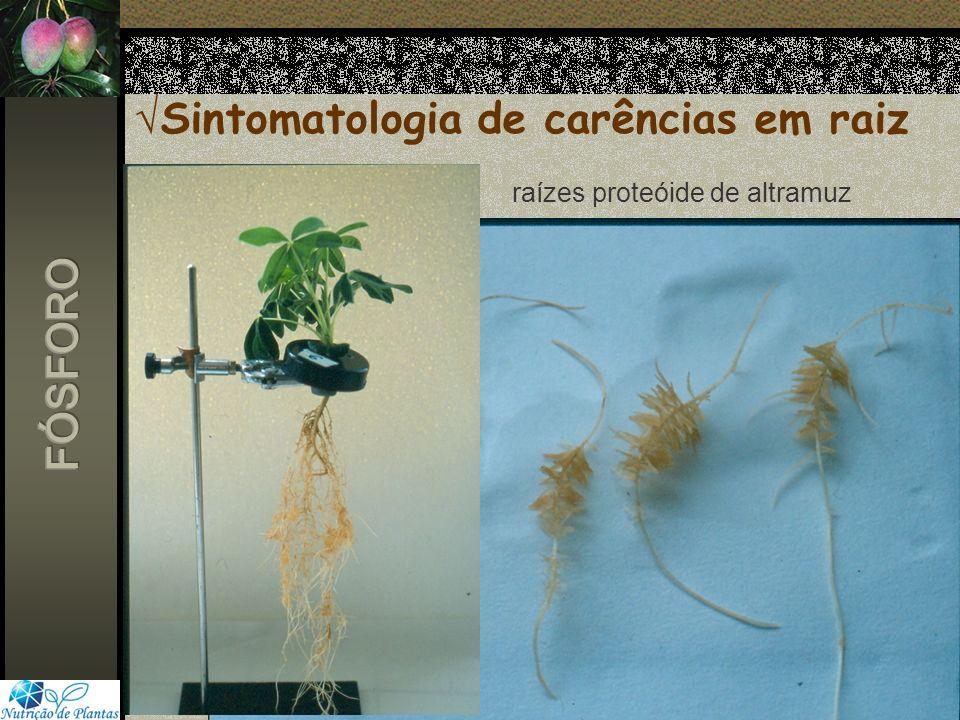 Sintomatologia de carências em raiz