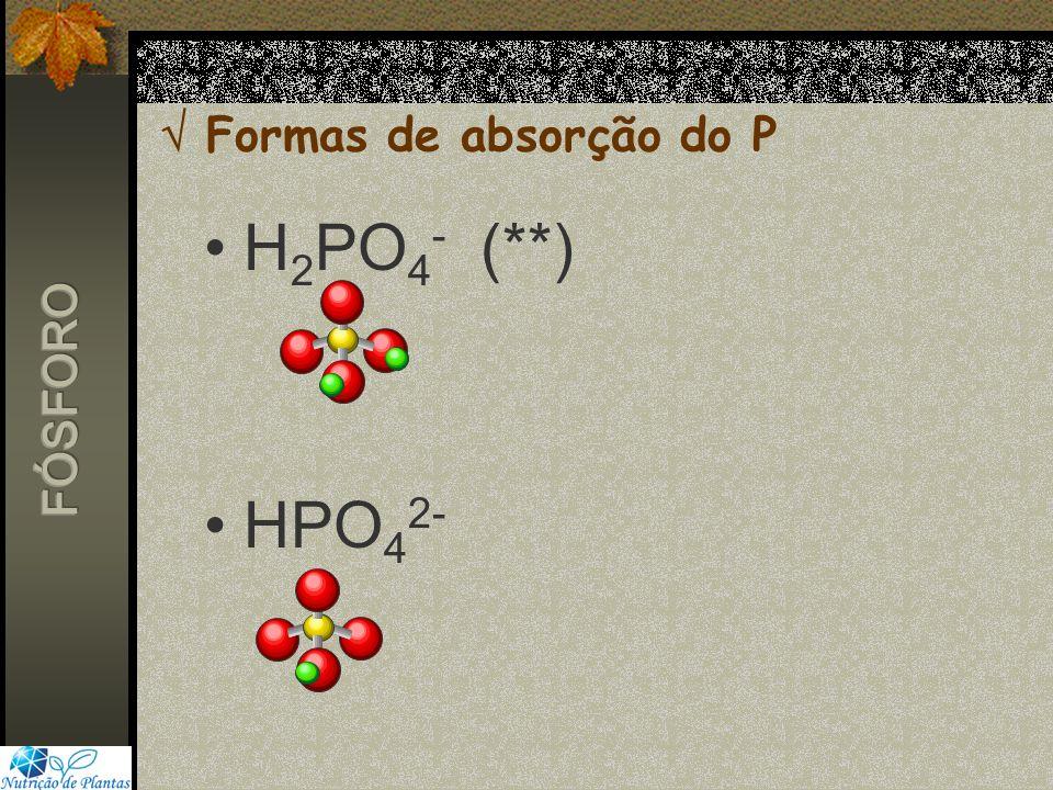  Formas de absorção do P