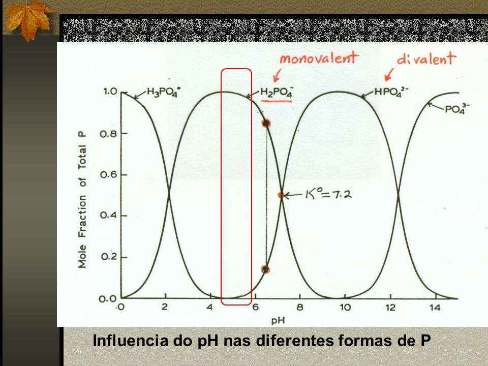Influencia do pH nas diferentes formas de P