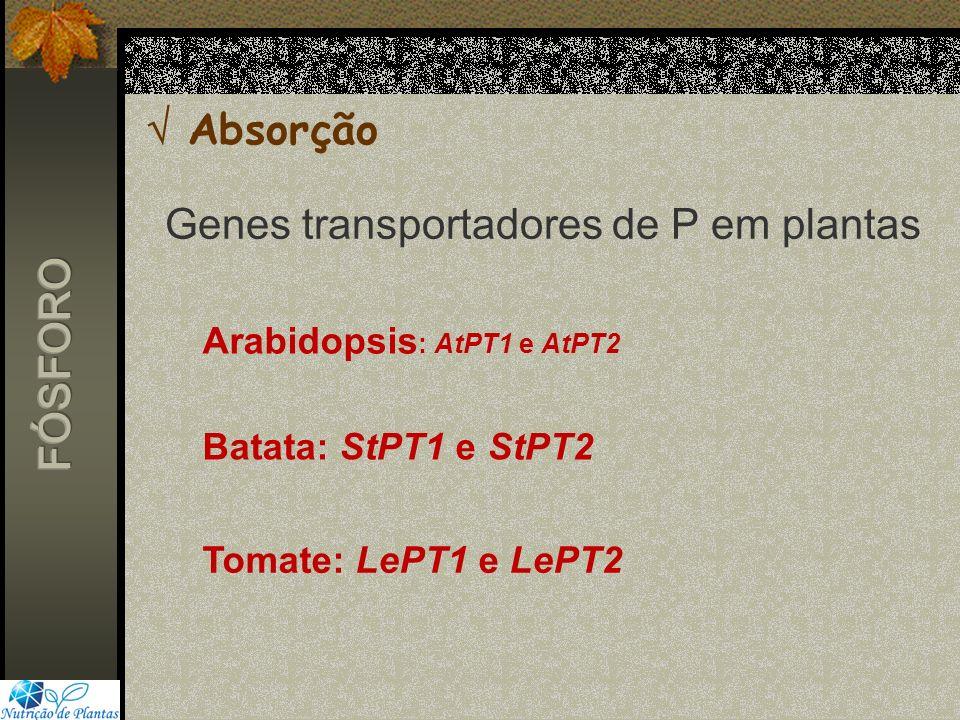 Genes transportadores de P em plantas