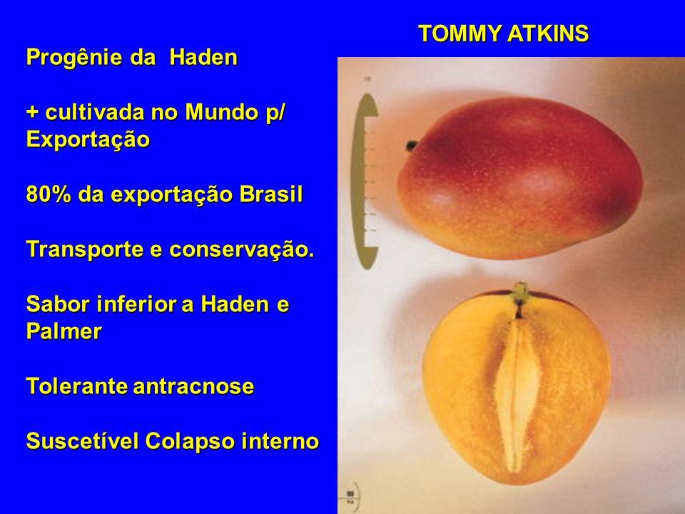 TOMMY ATKINS Progênie da Haden. + cultivada no Mundo p/ Exportação. 80% da exportação Brasil. Transporte e conservação.