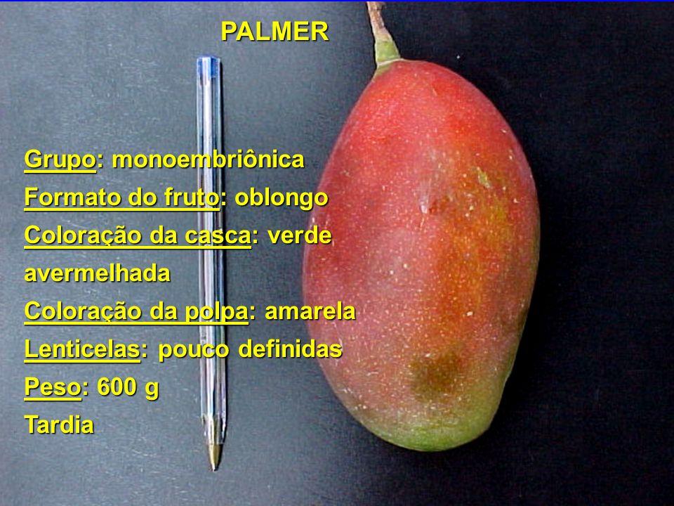 PALMER Grupo: monoembriônica Formato do fruto: oblongo