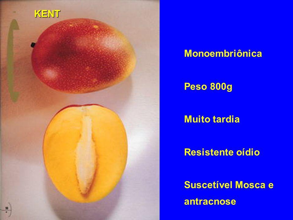 KENT Monoembriônica Peso 800g Muito tardia Resistente oídio Suscetível Mosca e antracnose