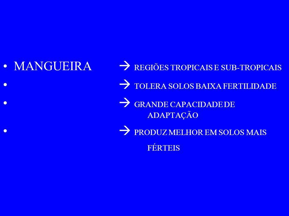 MANGUEIRA  REGIÕES TROPICAIS E SUB-TROPICAIS