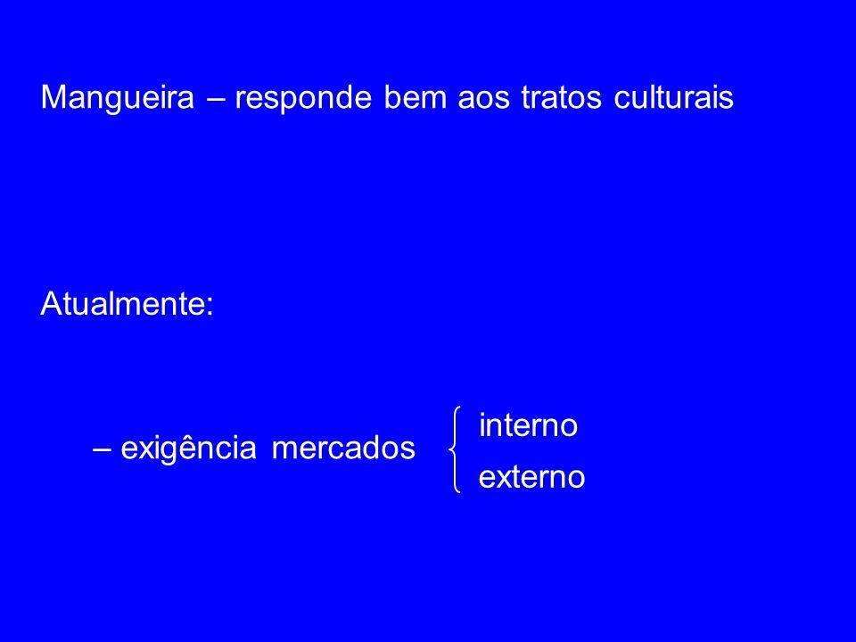 Mangueira – responde bem aos tratos culturais