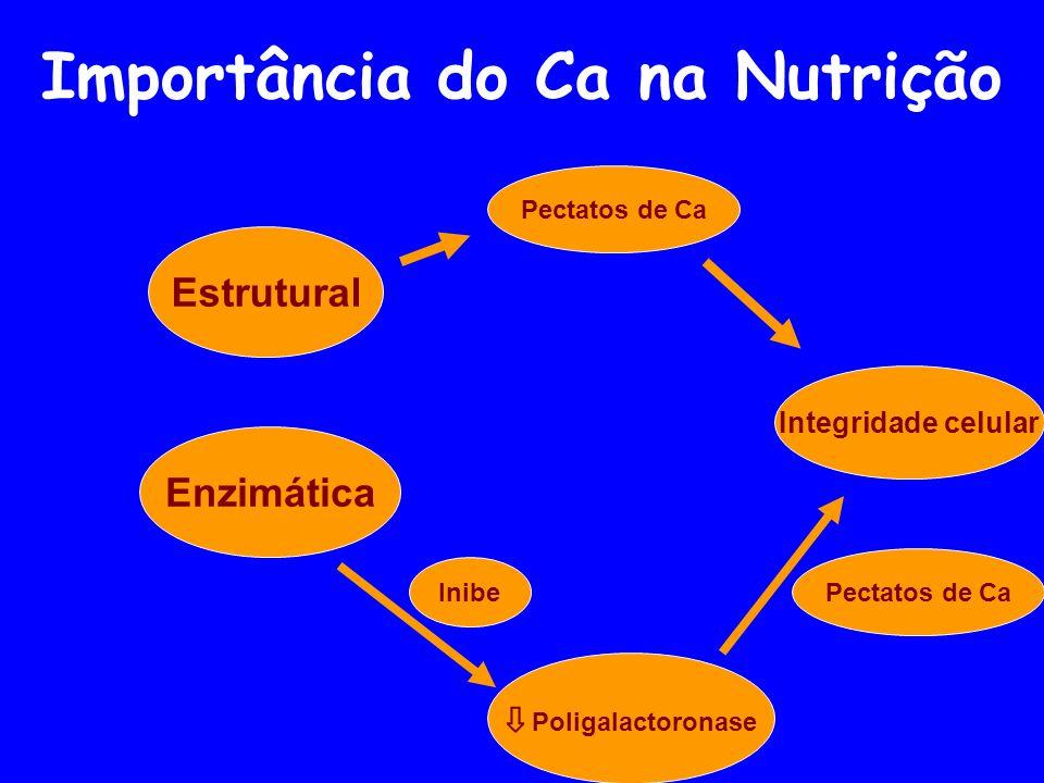 Importância do Ca na Nutrição