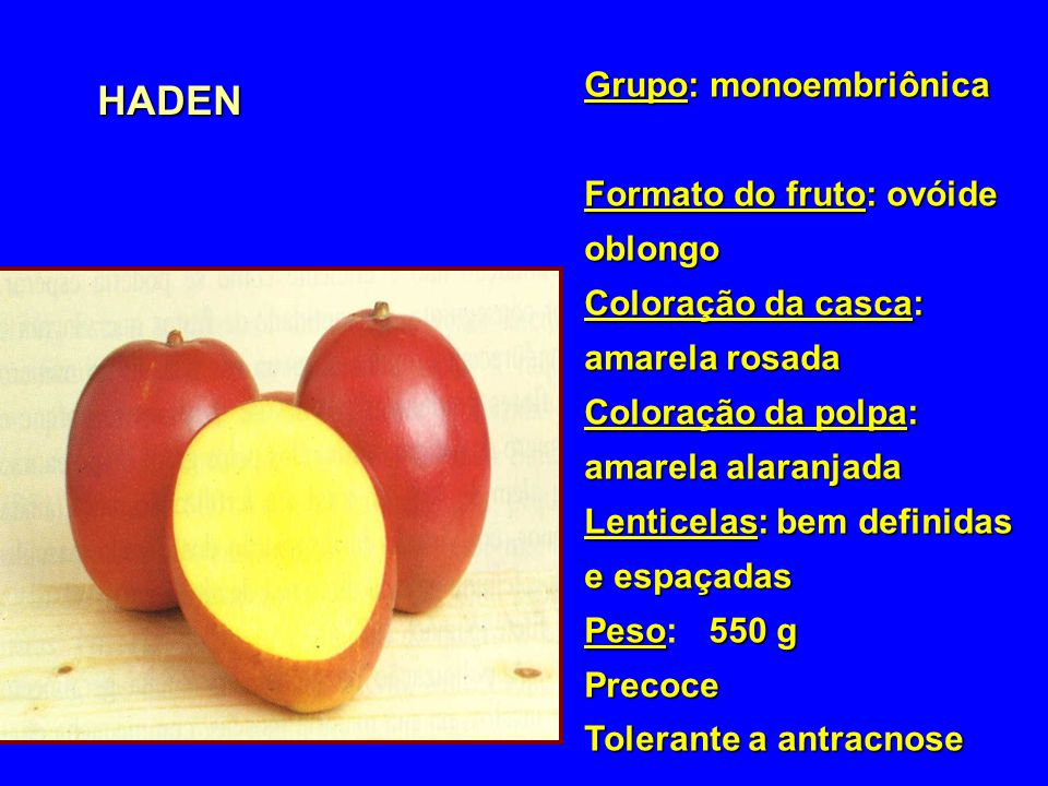 HADEN Grupo: monoembriônica Formato do fruto: ovóide oblongo