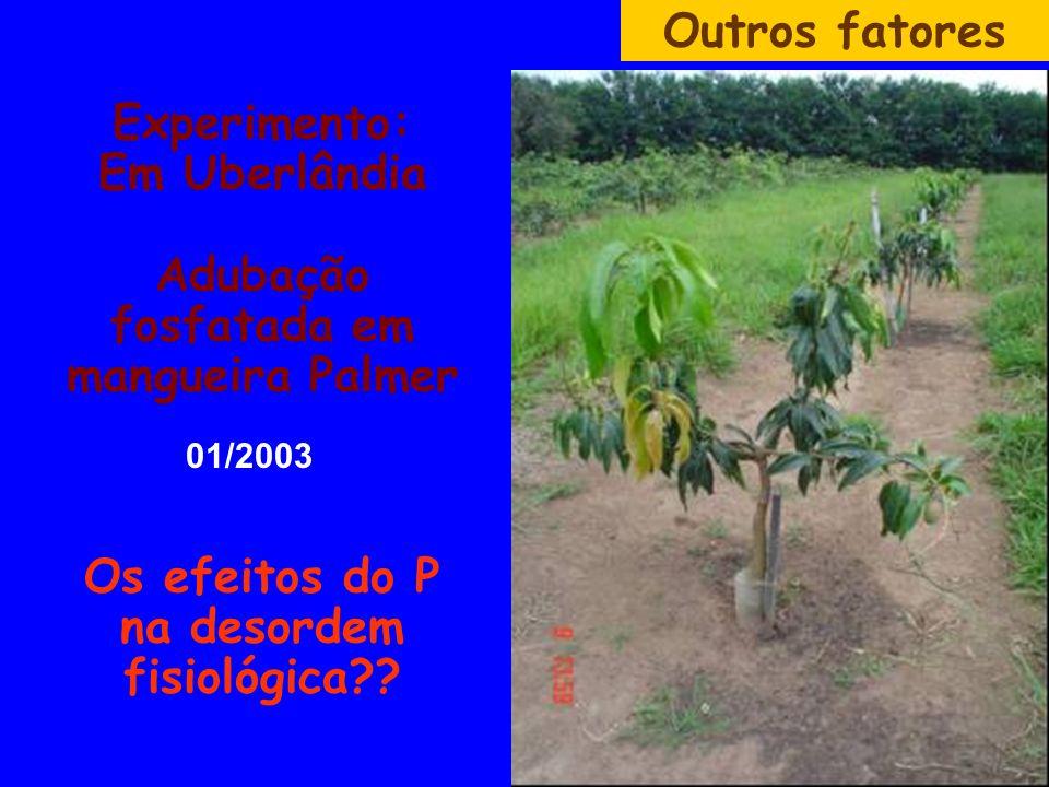 Outros fatores Experimento: Em Uberlândia Adubação fosfatada em mangueira Palmer Os efeitos do P na desordem fisiológica
