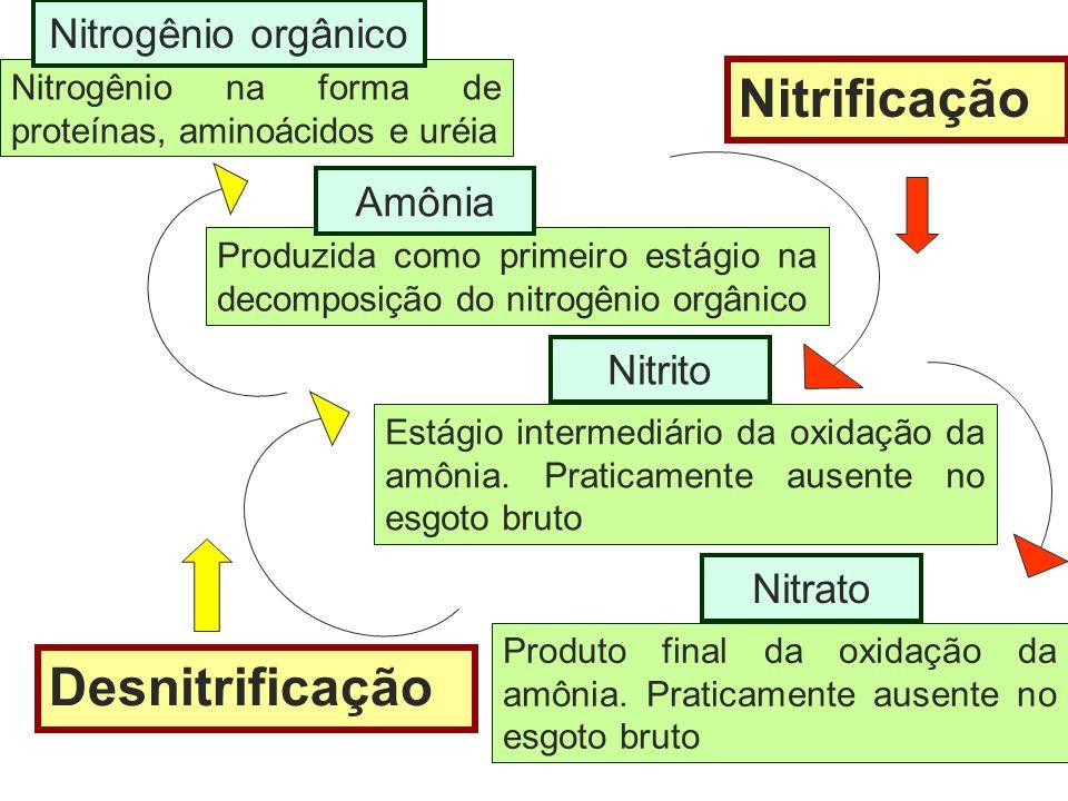 Nitrificação Desnitrificação Nitrogênio orgânico Amônia Nitrito