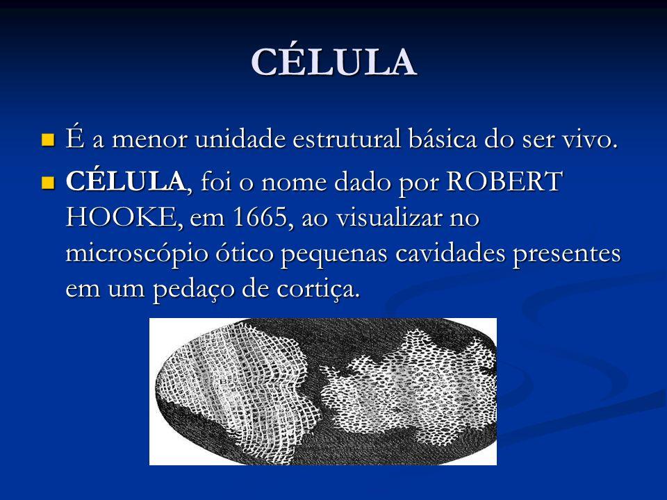 CÉLULA É a menor unidade estrutural básica do ser vivo.