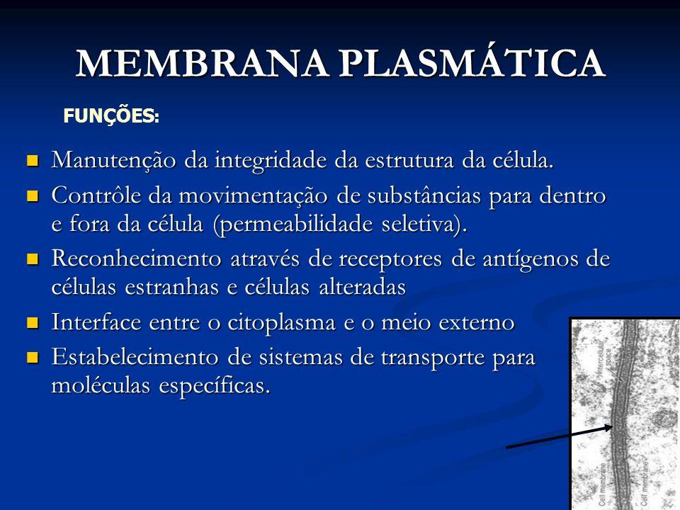 MEMBRANA PLASMÁTICA Manutenção da integridade da estrutura da célula.