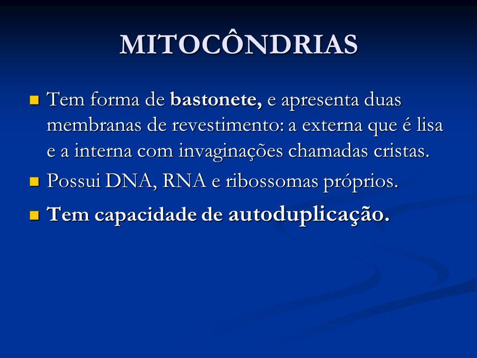 MITOCÔNDRIAS Tem forma de bastonete, e apresenta duas membranas de revestimento: a externa que é lisa e a interna com invaginações chamadas cristas.