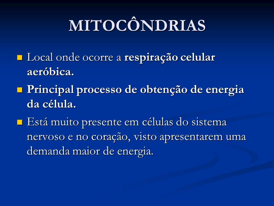 MITOCÔNDRIAS Local onde ocorre a respiração celular aeróbica.
