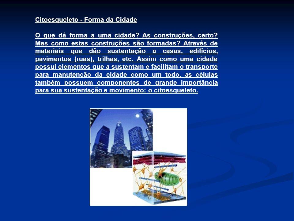 Citoesqueleto - Forma da Cidade