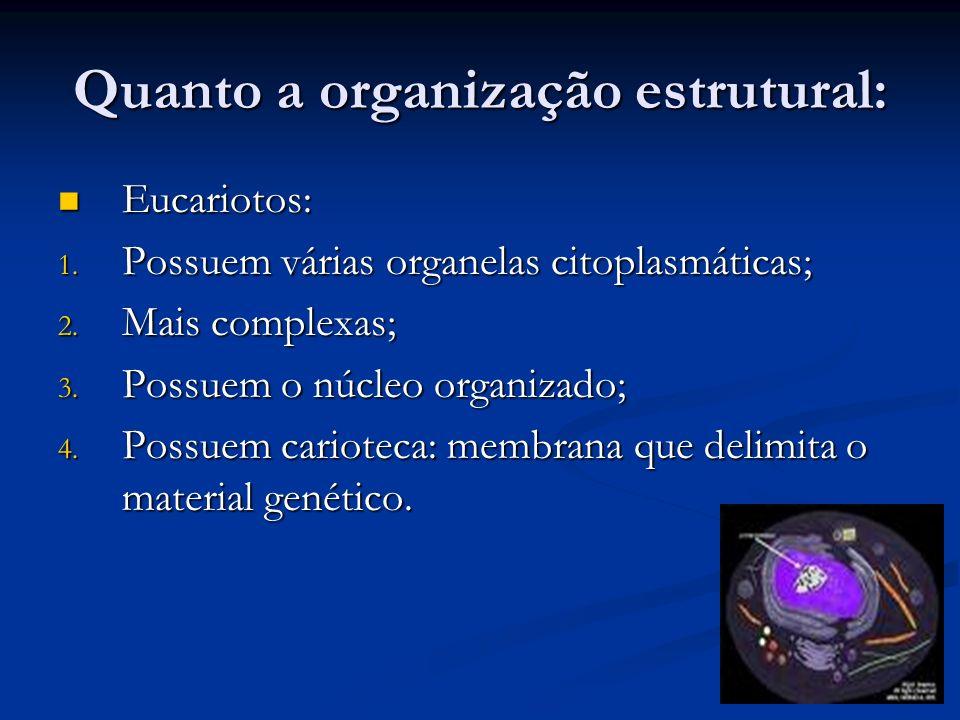 Quanto a organização estrutural: