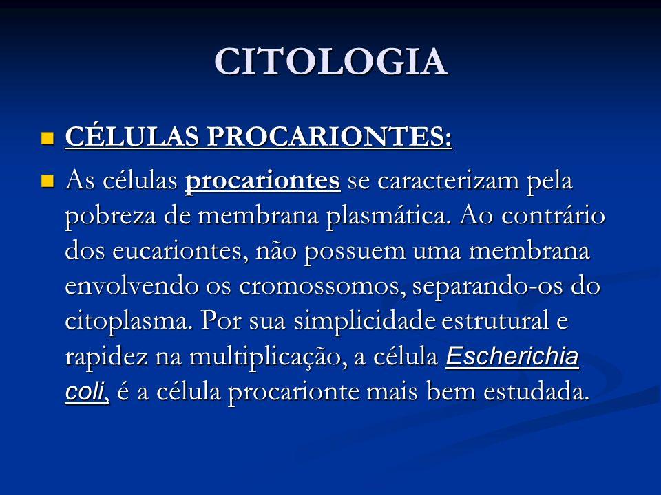 CITOLOGIA CÉLULAS PROCARIONTES: