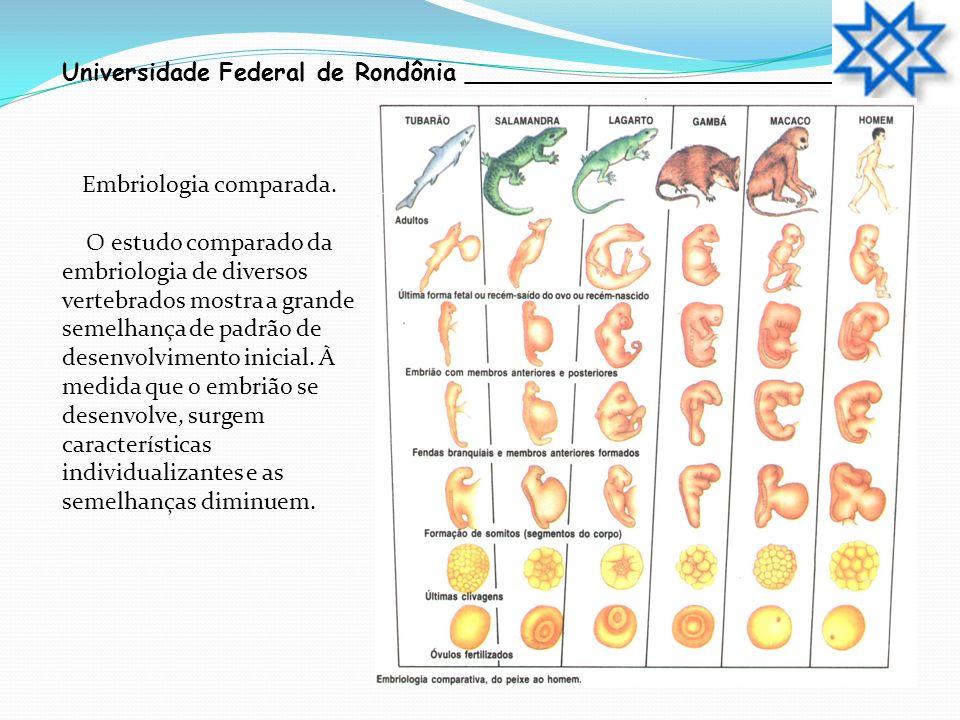 Embriologia comparada.