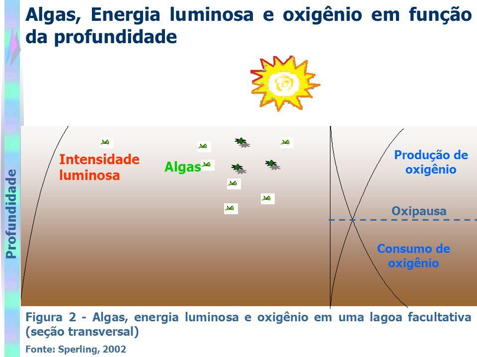 Algas, Energia luminosa e oxigênio em função da profundidade