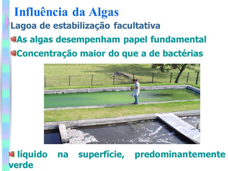 Influência da Algas Lagoa de estabilização facultativa