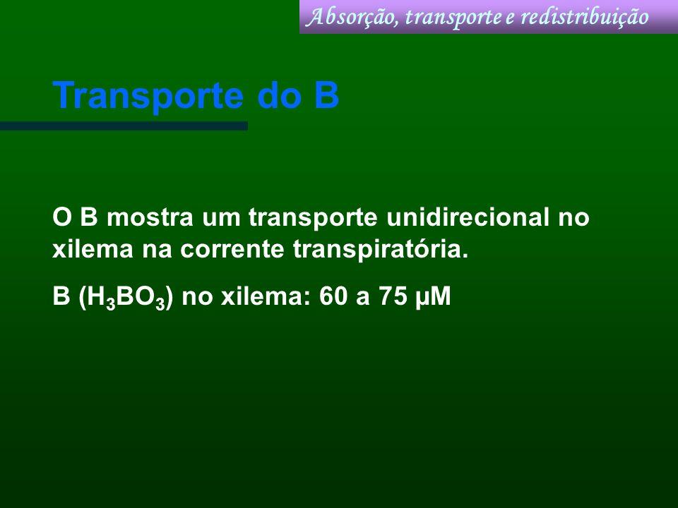Transporte do B Absorção, transporte e redistribuição
