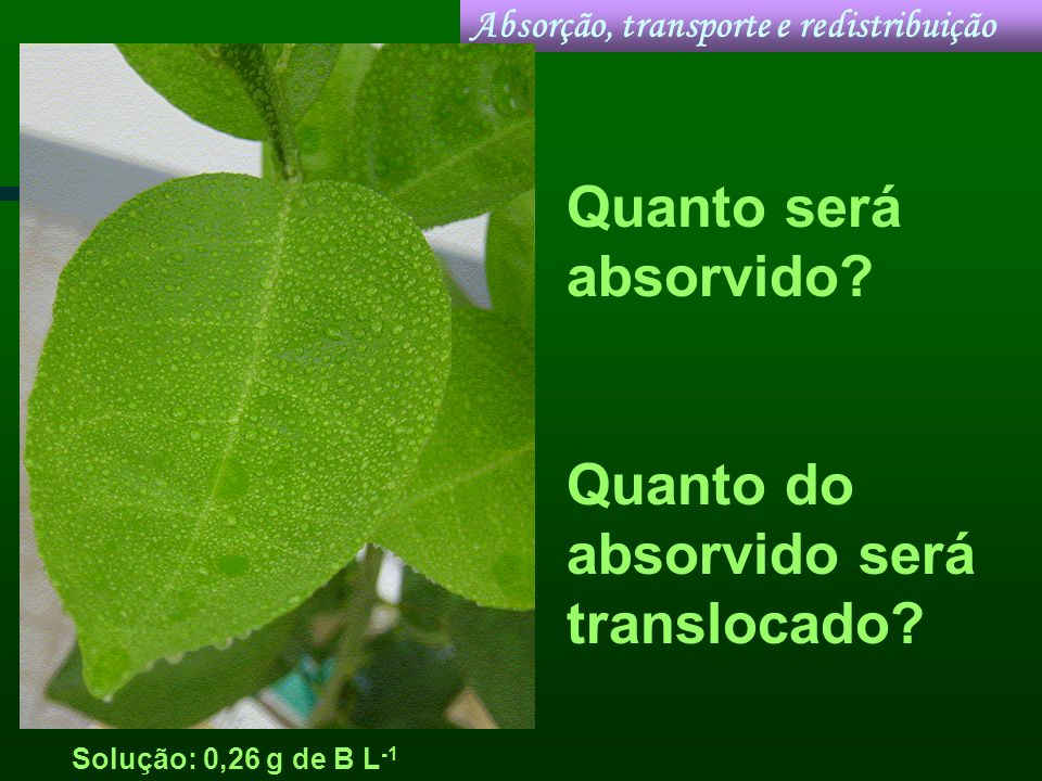 Quanto do absorvido será translocado