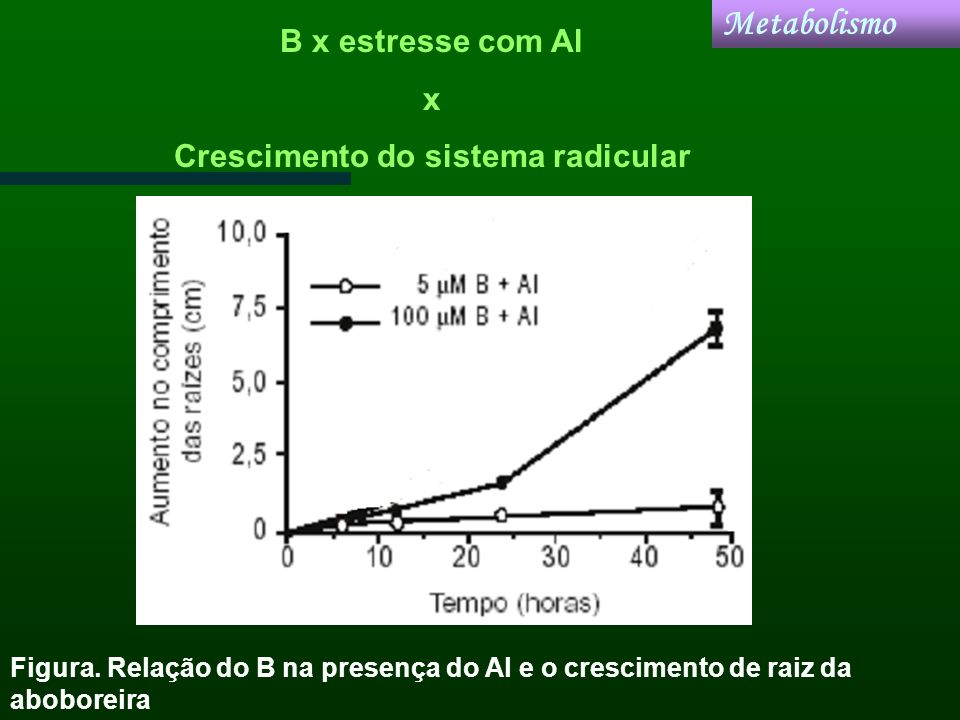 Crescimento do sistema radicular