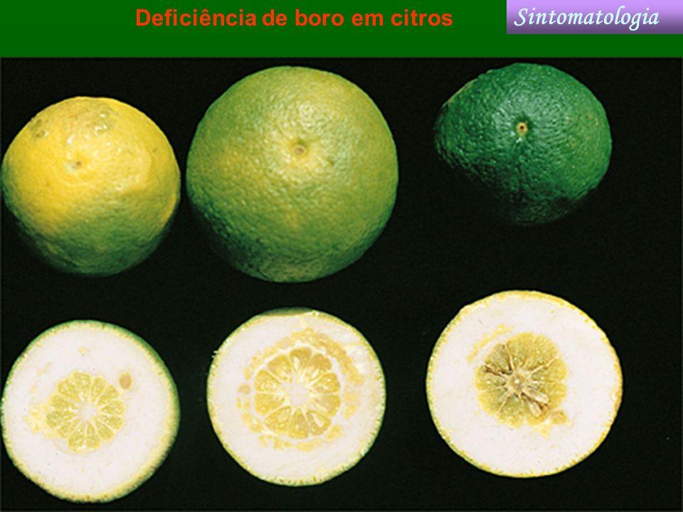 Deficiência de boro em citros