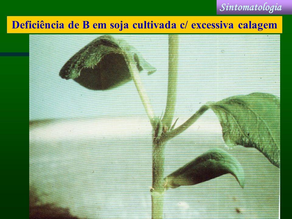 Deficiência de B em soja cultivada c/ excessiva calagem
