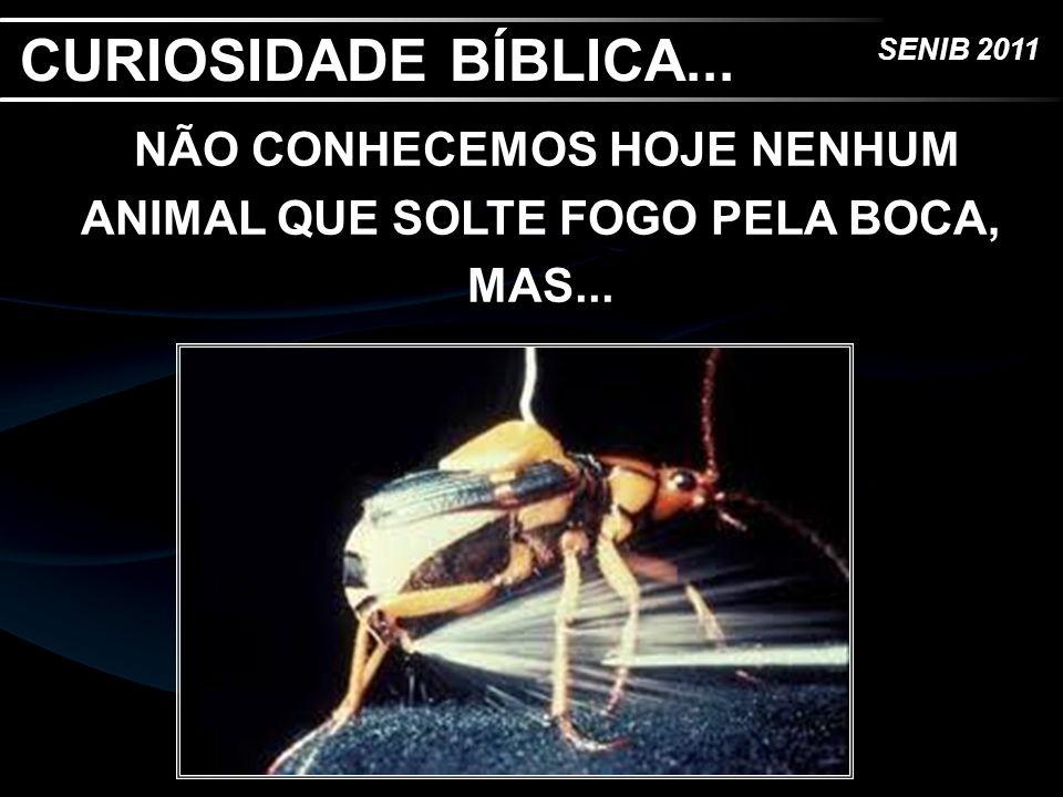 NÃO CONHECEMOS HOJE NENHUM ANIMAL QUE SOLTE FOGO PELA BOCA, MAS...