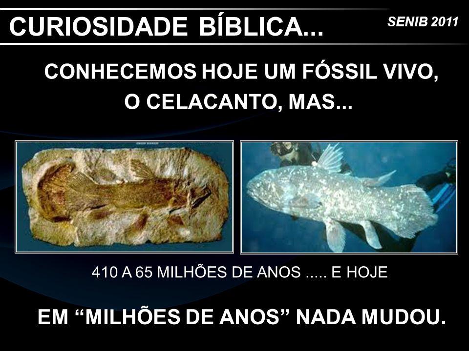 CURIOSIDADE BÍBLICA... CONHECEMOS HOJE UM FÓSSIL VIVO, O CELACANTO, MAS... 410 A 65 MILHÕES DE ANOS ..... E HOJE.