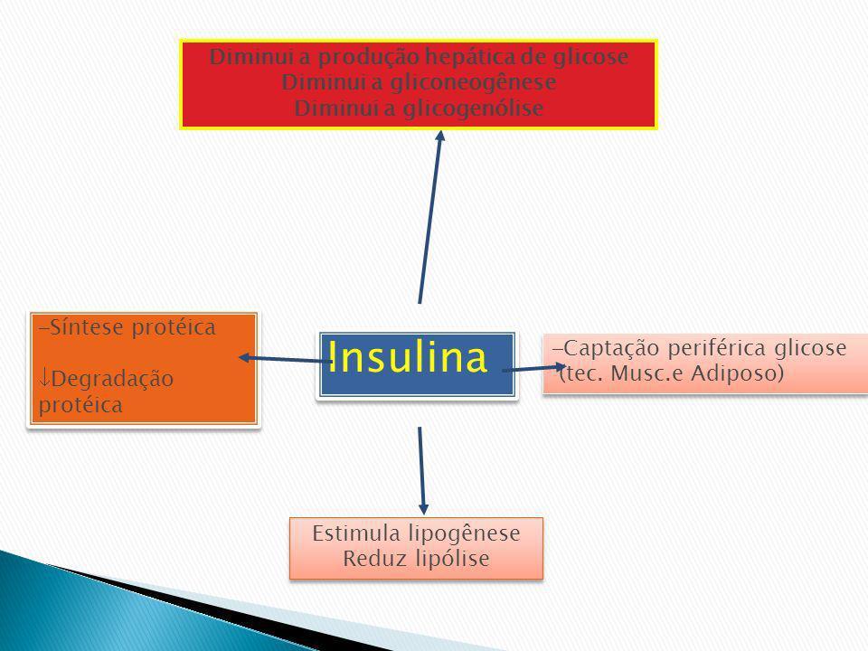 Insulina Diminui a produção hepática de glicose