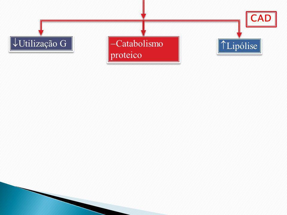 CAD Utilização G Catabolismo proteico Lipólise