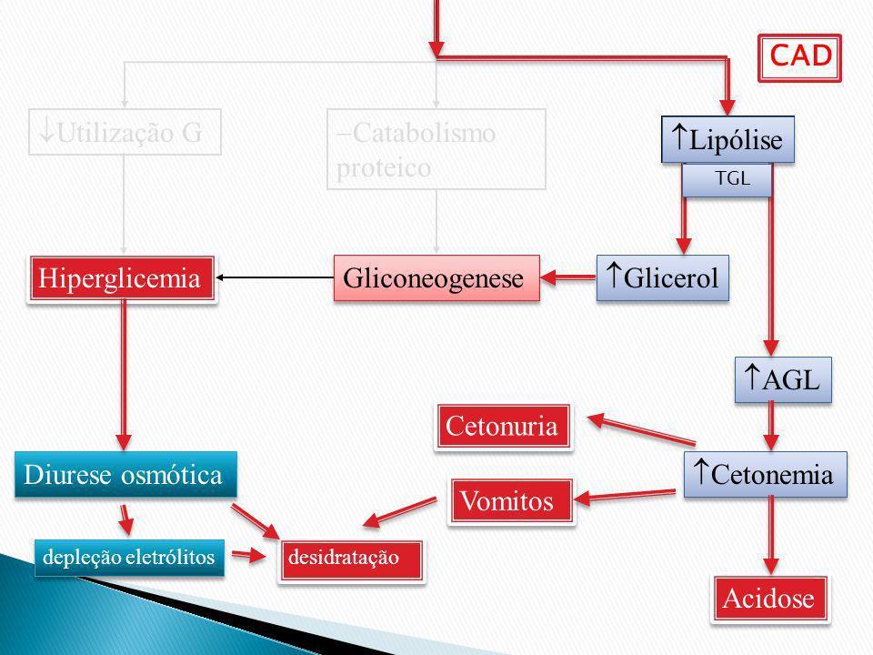 CAD Utilização G Catabolismo proteico Lipólise Lipólise