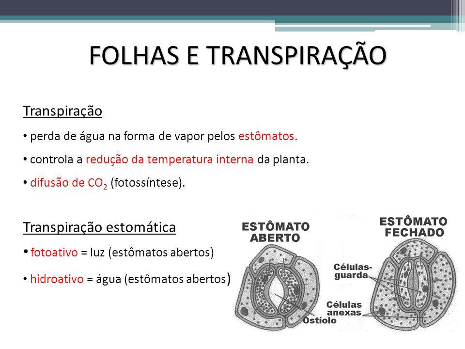 FOLHAS E TRANSPIRAÇÃO Transpiração Transpiração estomática