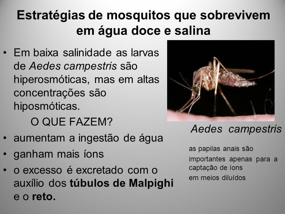 Estratégias de mosquitos que sobrevivem em água doce e salina