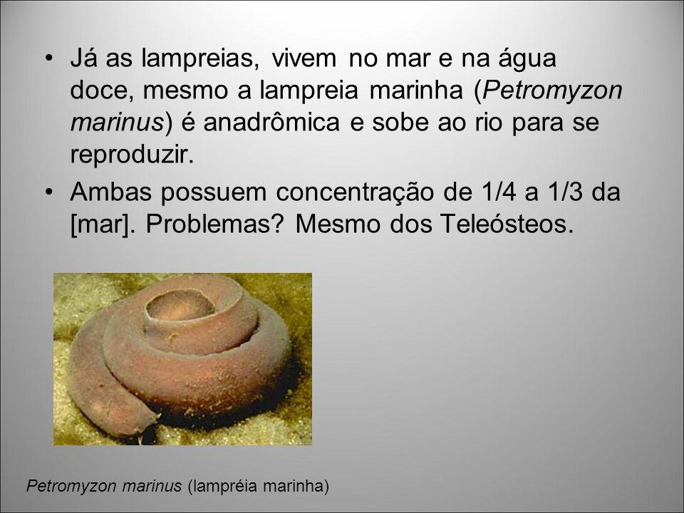 Já as lampreias, vivem no mar e na água doce, mesmo a lampreia marinha (Petromyzon marinus) é anadrômica e sobe ao rio para se reproduzir.