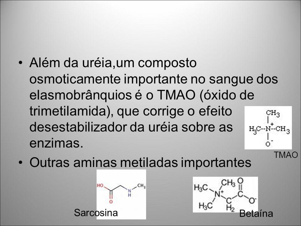 Outras aminas metiladas importantes