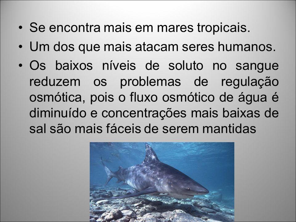 Se encontra mais em mares tropicais.
