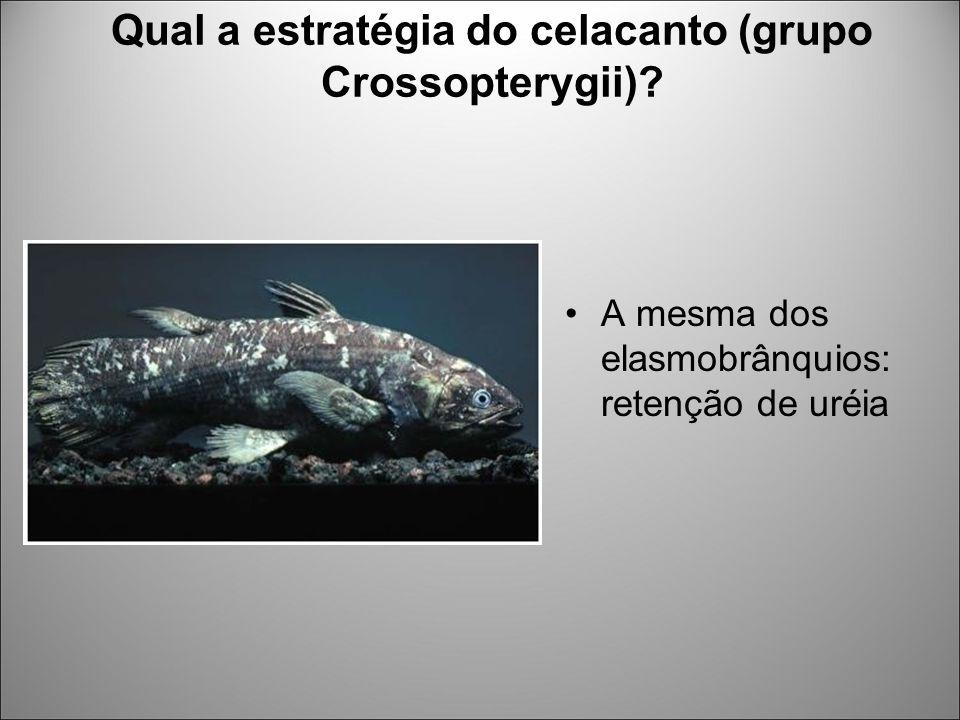 Qual a estratégia do celacanto (grupo Crossopterygii)