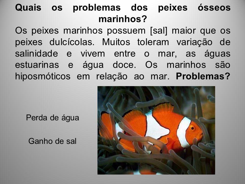Quais os problemas dos peixes ósseos marinhos