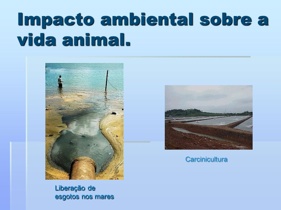 Impacto ambiental sobre a vida animal.