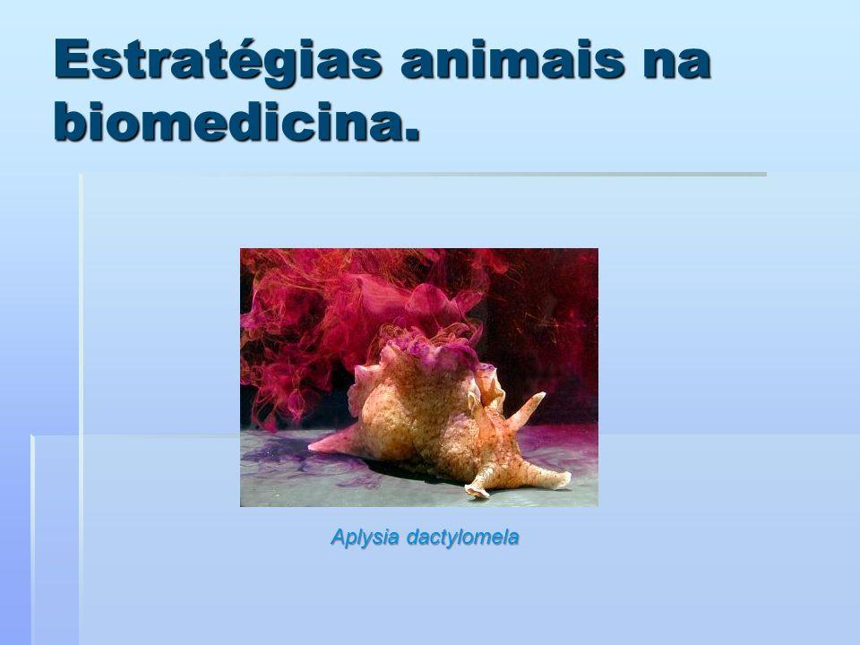 Estratégias animais na biomedicina.