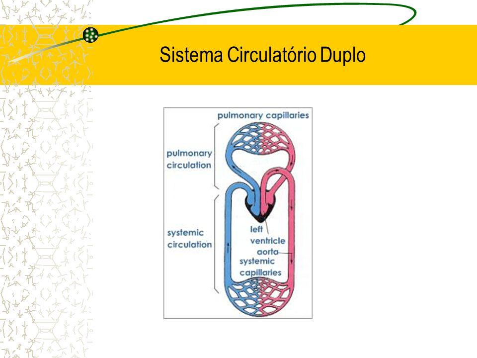 Sistema Circulatório Duplo