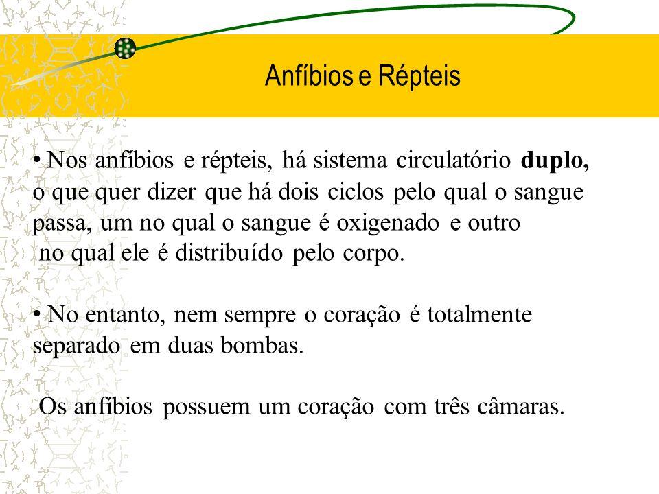 Anfíbios e Répteis Nos anfíbios e répteis, há sistema circulatório duplo, o que quer dizer que há dois ciclos pelo qual o sangue.