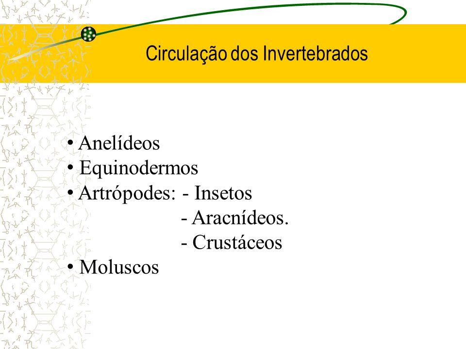 Circulação dos Invertebrados