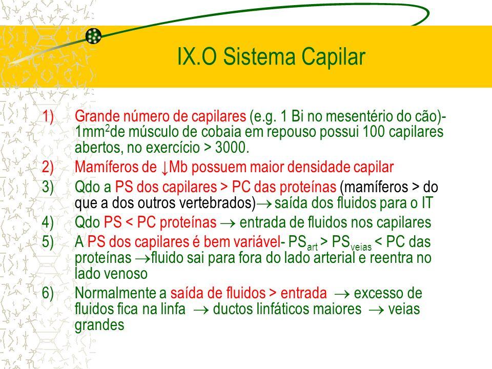 IX.O Sistema Capilar