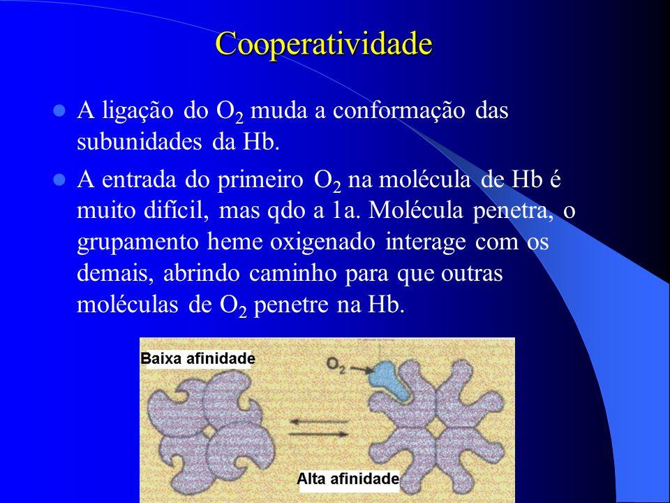 Cooperatividade A ligação do O2 muda a conformação das subunidades da Hb.