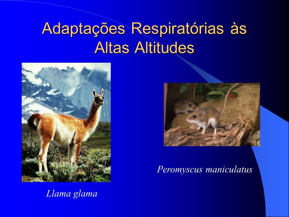 Adaptações Respiratórias às Altas Altitudes